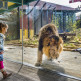 Land of Lions 04_16 022